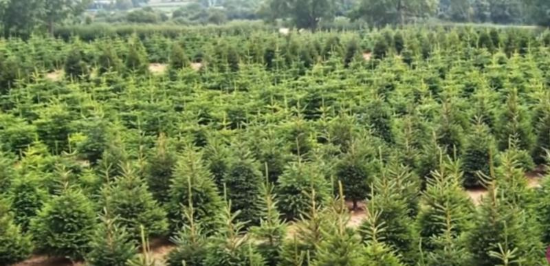 plants trees