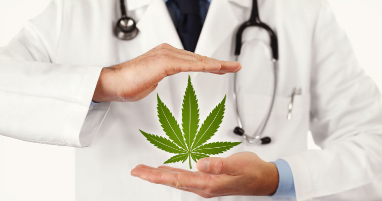 cannabis destroys cancer cells