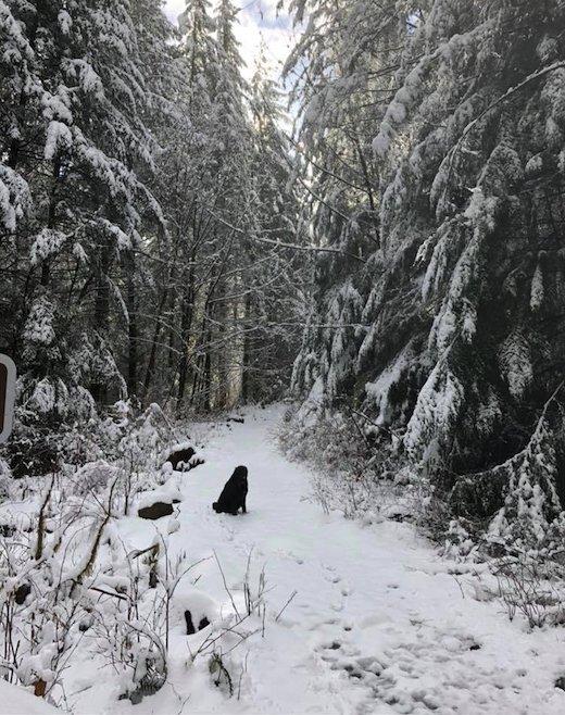 strange dog joins couple on hike